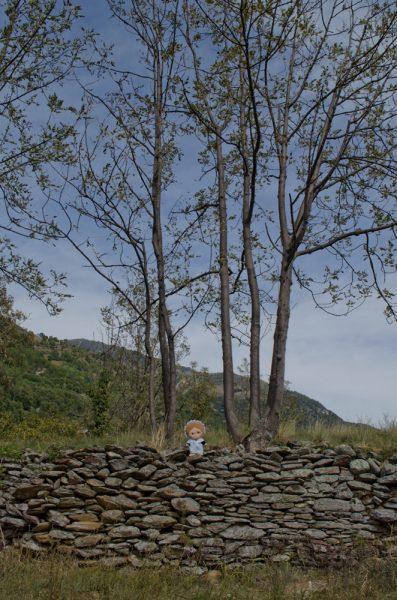 Gli alberi crescono tra le rovine del castello