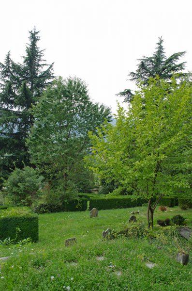 I maestosi alberi del Cimitero dei Jallà